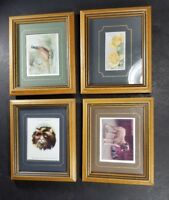 4 Mounted Framed Cigarette Collector Cards Animals Floral John Player's Will's