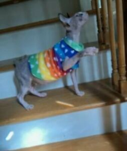 Fleece sphynx cat kitten shirt clothes clothing small dog combined shipping