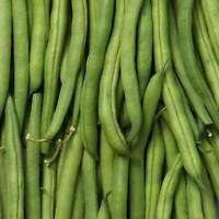 SLENDERETTE BUSH BEAN SEEDS - NON-GMO, HEIRLOOM GREEN SNAP - VEGETABLE GARDEN