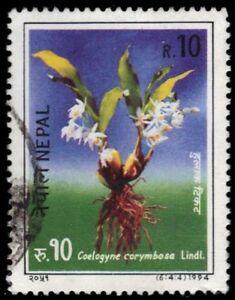 """NEPAL 550d - Orchids """"Coelogyne corymbosa"""" (pa43079)"""
