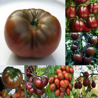 Seeds Tomato Black Russian Early Cherry Big Large Vegetable Organic Heirloom