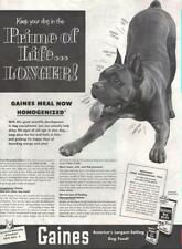 1952 Gaines Print Ad Dog Food feat: Playful Boxer or American Pit bull Terrier