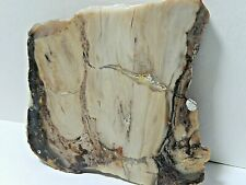 """What is this Rock Picture Jasper or Petrified Wood Slab 1.9 Oz.2 1/2 x 2 1/2"""""""