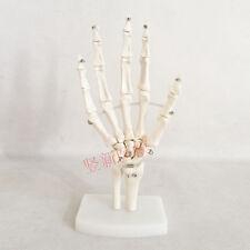 1:1 Human Anatomical Bones Joints of Hand Ulna Radius Skeleton Medical Model 74