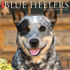 Just Blue Heelers (dog breed calendar) 2021 Wall Calendar(Free Shipping)