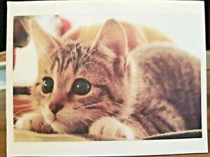 "KITTY'S NOTE CARDS - Set of 10 + Envelopes - ""Shhh! Hiding!"""