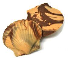 SweetGourmet Asher's Gourmet Milk Chocolate Coated Large Molded Seashells,10 Pcs
