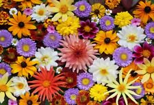 Vinyl 7x5Ft Colorful Flowers Photo Backdrops Studio Photography Background Props