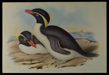 John Gould Crested Penguin Bird British Museum Official Limited Print