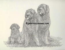 Signed & Numbered FINE ART PRINT Newfoundland Newfies Newfy Dog FromTheArtist