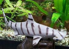 New listing Vintage Old Aquarium Fishbowl Ceramic Bisque Pottery Striped Hammerhead Shark