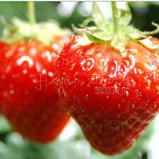 100 Perennial ALPINE STRAWBERRY Seeds Heirloom Organic Fruits Sweet TT199