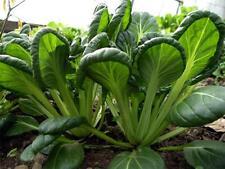 Tatsoi Green Seeds Heirloom Organic Fresh 2018 For Season Great in Salad 100 F/S