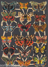 BUTTERFLIES INSECTS MOTH SPRING CUT MONARCH GERMAN PAPER  CUT 2013 ART EMBOSSED