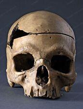 (2) 8x10 Prints Early Human Skeletons #HU9898