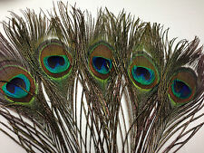 5 X 26-30cm Peacock Eye Natural Feathers DIY Art Craft Millinery Vase Smudge Fan