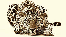 LARGE CANVAS PICTURE LEOPARD BROWN CREAM WALL ART 36x20