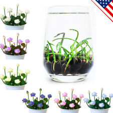 Moni Lotus Seeds Flower Plants Water lily Bowl Indoor Aquatic Beautiful 6 Colors