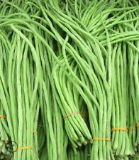 bean, Yard Long Beans, pole type, 20 seeds! GroCo#