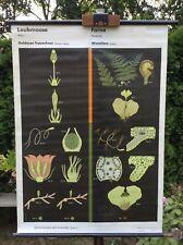 Schulwandkarte Rollkarte Laubmoose Farne Wald Pflanzen Wandkarte Lehrtafel Deko