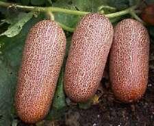 CUCUMBER POONA KHEERA (20 SEEDS) HEIRLOOM - Disease resistant cucumber!