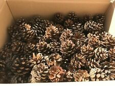 200+ Natural Quality Fir Pine Cones craft, Christmas, decorations, fast dispatch