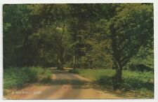 A New Forest Glade - J Salmon Postcard 1-57-01-12. Posted 1975