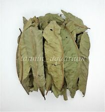 Taiwan Natural Organic Guava Leaves Anti Bacteria Super Shrimp Food Help Molting