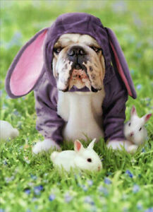 Dog In Bunny Suit Funny Bulldog Easter Card - Greeting Card by Avanti Press
