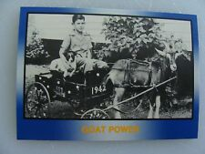 GOAT POWER - YOUNG DAVID PEARSON - GOAT- CARD #60 -'91 TG Racing, Inc Masters