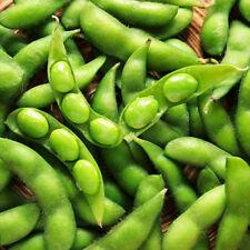 10 grams Soybeans Seeds, Glycine Max, Edamame Seeds Green Vegetable