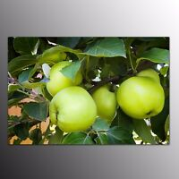 Modern Wall Art Canvas Prints Picture Home Decor Apple Canvas Oil Painting