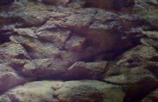 Aquarium Fotorückwand ROCK FELSEN 200x50 Rückwand Rückwandfolie 200 50 Poster