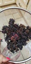 Dr  Sebi Raw Irish Sea Moss (8 ounces) Chondrus Crispus Dry