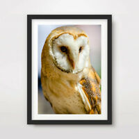 BARN OWL ANIMAL WILDLIFE PHOTOGRAPHY ART PRINT Poster A4 A3 A2 Wall Picture