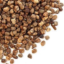 Decorticated Cardamom Seeds, Bulk 5 lb.