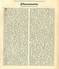 Il dottor Udo Dammer: (folcloristiche) piante nome * Adattatore di 1905