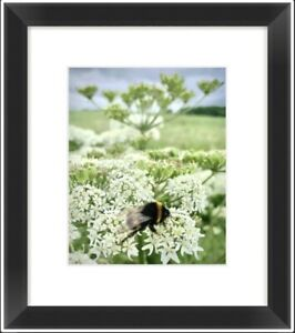 """Botanical Photographic """"Busy Bee"""" Print"""