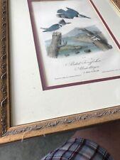 Audobon First Edition Kingfisher Octavo Edition