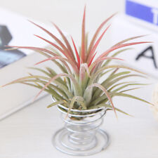 Stainless Steel Air Plant Stand Container Tillandsia Holder Rack Display Desk KV