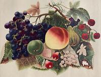 1965 Lithograph of Fruit Arrangement Winter 19th Century Watercolor Penn Prints