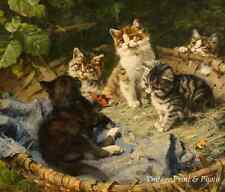 Five Kittens in a Basket by Julius Adam Pet Cat Kitty Playing 8x10 Art Print 561
