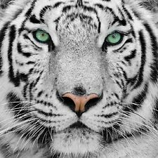 WhiteTiger Head 5D Diamond Mosaic painting Kit 30x30cm like cross stitch