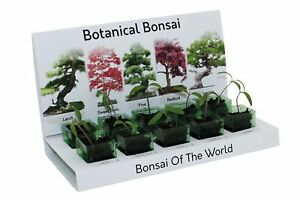 Eco Bonsai Tree Grow Your Own Kit Includes Everything to Grow - 5 Varieties