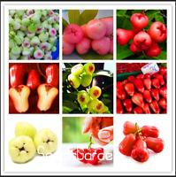 50 PCS Seeds Rose Apple Bonsai Rare China Fruit Flores For Home Garden Planting