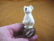 (Tn-Bea-Ko-436C) baby Koala Bear Tagua Nut Figurine Carving Vegetable koalas