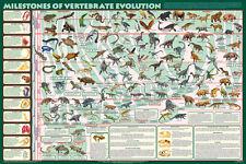 Milestones of Vertebrate Evolution natural history chart poster print 24x36