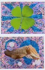 2 Glitzer + UNSERE WUNDERWELT + Kleeblatt Tintenfisch SAMMELSTICKER BILDER  REWE