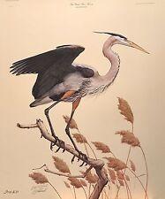 Guy Coheleach Great Blue Heron Print
