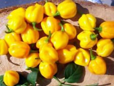 Chilli PEPPER-SCOTCH COFANO (Giallo) 10 SEMI Finest